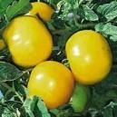 Tomates jaunes Lemon Boy