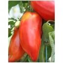 Tomates Andine Cornue